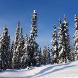 Scenisk instagram av träd som täckas i insnöad vinter Arkivfoton