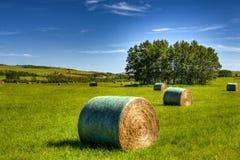 scenisk jordbruksmark Arkivfoto