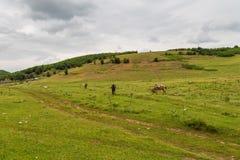 Scenisk landskapsikt i albanskt berg, drag arkivfoto