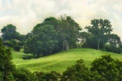 Scenisk landskapsikt längs Tennessee River Royaltyfri Bild