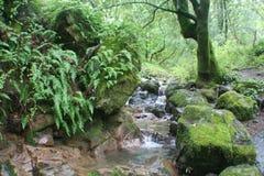 Scenisk liten vik i regn Forest High Quality Stock Photo arkivbild