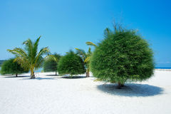 Scenisk Malibu strand på Koh Phangan, Thailand Royaltyfri Bild