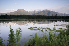 Scenisk Marsh Water Panoramic Mountain Landscape vildmark Alaska Arkivfoto