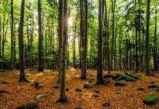 Scenisk panorama i en höstlig bokträdskog, Bayern, Tyskland, Europa Royaltyfri Bild