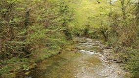 Scenisk sikt av de bergfloden och forsarna med vattenfall i skogen stock video