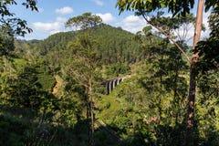 scenisk sikt av den järnväg vägen och olika träd med grön lövverk i Asien Royaltyfria Foton