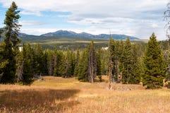 Scenisk sikt av den Yellowstone nationalparken Arkivbilder