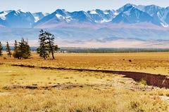 Scenisk sikt av dentäckte nord-Chuyakanten i de Altai bergen arkivbild
