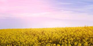 Scenisk sikt av det gula senapsgula fältet arkivfoto