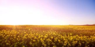 Scenisk sikt av det härliga senapsgula fältet Royaltyfri Foto