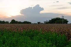 Scenisk sikt av ett åkerbrukt fält arkivfoto