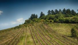 Scenisk sikt av ett fält för vindruva fotografering för bildbyråer