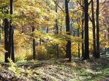 Scenisk sikt av färgrika träd i skog i Beskid berglandskap i POLEN Arkivbild