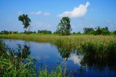 Scenisk sikt av flodstranden och våtmark arkivbilder