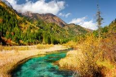 Scenisk sikt av Green River med crystal vatten bland nedgångfält Royaltyfria Foton