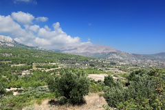 Scenisk sikt av olivgröna dungar, Rhodes ö (Grekland) Arkivbilder