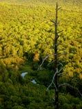 Scenisk sikt av skogen i Wisconsin fotografering för bildbyråer
