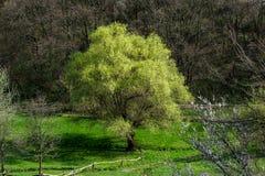 Scenisk sikt av skogen med olika träd på den soliga dagen Arkivfoton