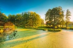 Scenisk sikt av sommar Sunny Forest Woods And Wild Bog Natur n royaltyfri bild