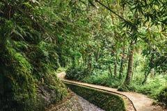 scenisk sikt av strömmen i grön skog i ubud, arkivbild