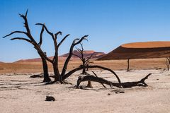 Scenisk sikt p? Deadvlei, Sossusvlei Namib-Naukluft nationalpark, Namibia royaltyfri bild