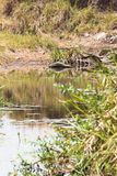 Scenisk sjö i masaien Mara, Kenya royaltyfria bilder
