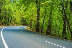 scenisk skogväg Arkivfoton