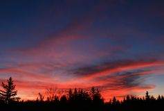 Scenisk solnedgång mot kontur av Forest Trees Royaltyfria Bilder