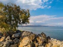Scenisk stenig kust av Kinnereten som inramas av vegetation Royaltyfria Bilder