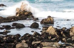 Stenig kustlinje Along för HDR det 17 Mil drevet Arkivbilder