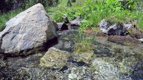 Scenisk ström i bergen Gräs och blommor på banken av bäcken stock video