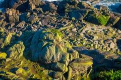 Scenisk Tauranga för skyddsremsakoloni fjärd i västkusten, Nya Zeeland Arkivbild