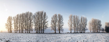 Scenisk trädgränd i vinter med snö täckte fält Royaltyfri Fotografi