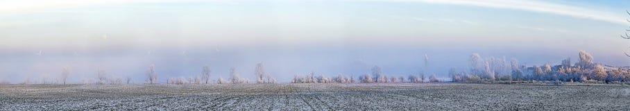 Scenisk trädgränd i vinter med snö täckte fält Arkivbilder