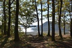 scenisk tree Arkivbilder