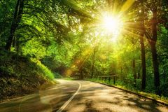 Scenisk väg i en skog Royaltyfri Bild