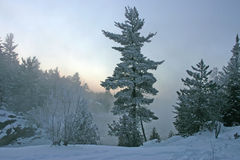 scenisk vinter 10 Arkivbild