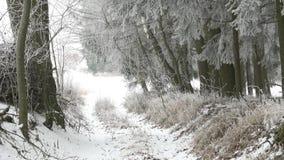 scenisk vinter för liggande arkivfilmer