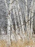 scenisk vinter för liggande Arkivbilder