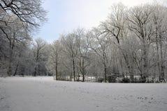 scenisk vinter för park Arkivfoto