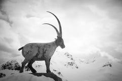 Scenisk vykorts- sikt av det berömda stället, symbol av det Grossglockner berget med molnet & dimma, Österrike Arkivfoton