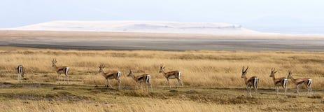 Sceniska afrikanslättar för panorama Arkivfoton