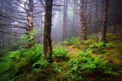 Sceniska Forest Hiking Appalachian Trail North Carolina Nature Lan Arkivfoton