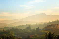 Sceniska gröna berganbdjungler, Ceylon Royaltyfri Foto