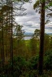 Sceniska Killarney Royaltyfri Bild