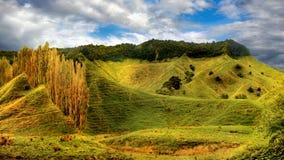 Sceniska kullar för grönt gräs för landskap, Nya Zeeland Fotografering för Bildbyråer