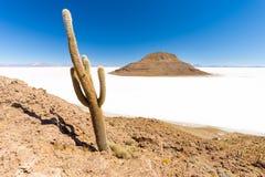 Sceniska länder för enorma för kaktusSalar De Uyuni ö berg för vulkan Royaltyfria Bilder