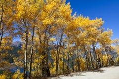 Sceniska Mountain View till och med aspar med sjön royaltyfria foton