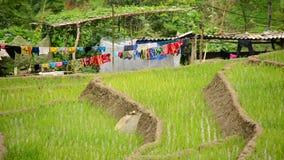 Sceniska Sapa Vietnam lager videofilmer
