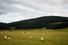 Sceniska Skottland Arkivbilder